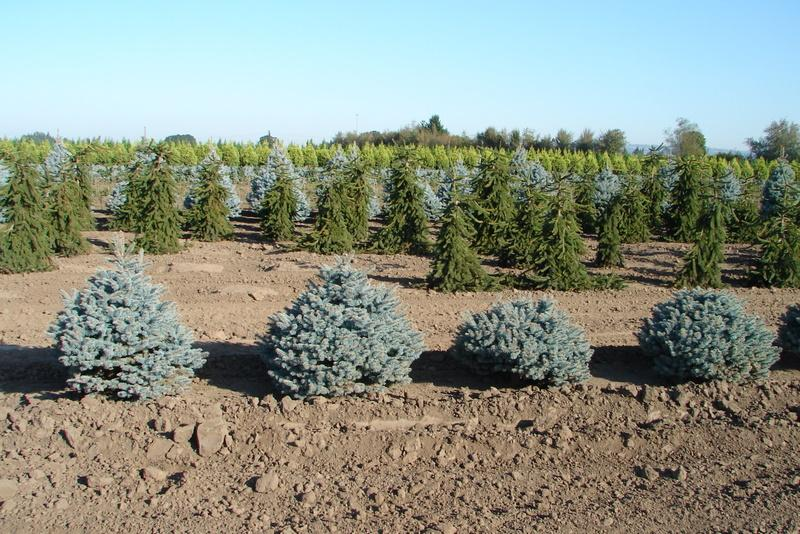 how to become a master grower in colorado